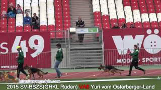 2015 SV-BSZS(GHKL Rüden) VA8 Yuri vom Osterberger-Land