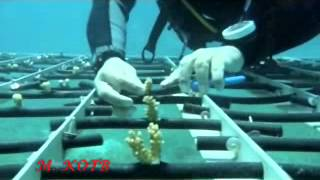 preview picture of video 'Aqaba Coral Reef Translocation Project-2012'