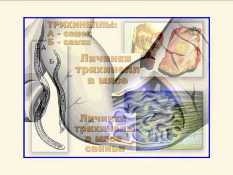 Е. корнакова паразиты человека