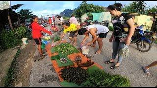 ตลาดเช้าวังเวียง สปป.ลาว ของป่า อาหารลาว ในช่วงหน้าฝน