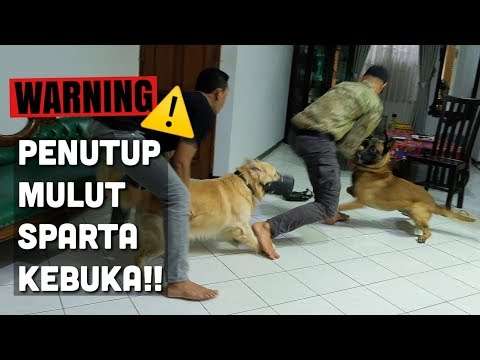 Download SNOWEE KETEMU SPARTA PART. 3 (SUSAH BANGET.. HUHU) HD Mp4 3GP Video and MP3