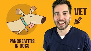 Pancreatitis In Dogs - Symptoms, Treatment, Diet, And More | Vet Explains