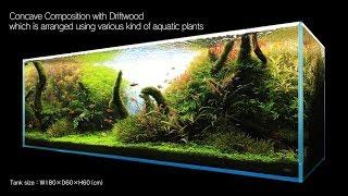 ADA: Zakładanie akwarium