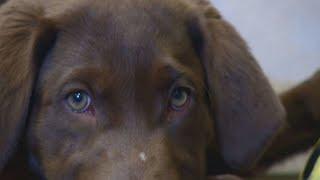 Police drug dogs trained to ignore marijuana