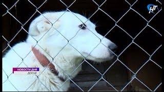Бывший центр Центр служебного собаководства может стать приютом для бездомных животных
