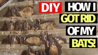 DIY - How I got rid of my bats!