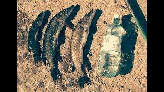Рыбалка в хворостянке самарская область