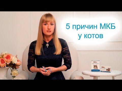 ☛ Мочекаменная болезнь (МКБ) у котов: 5 причин