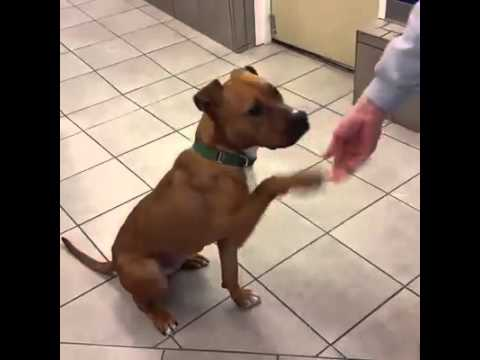 Zayn (Happy & Dog Friendly Boy, Excellent Jogging Buddy) - FOSTER, an adopted Shepherd & Boxer Mix in Jersey City, NJ
