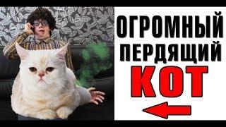 Лютые приколы. Огромный пердящий кот. ФАБРИКА ЮМОРА