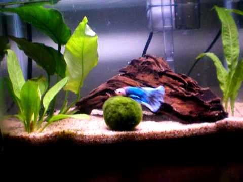 Small fish tank what to put in there yahoo answers for Fish tank riddle