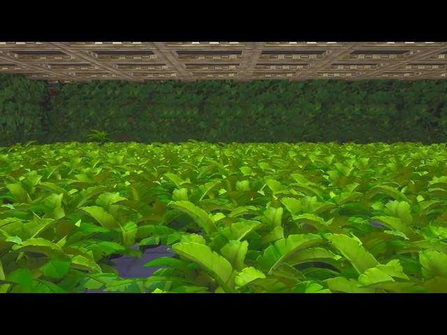 Jungle Deathrun