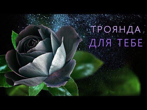 💖 Ця Троянда Для Тебе!💖 Найкращі побажання