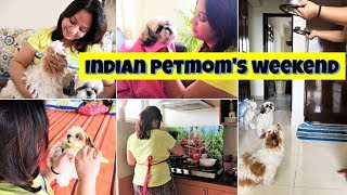 Busy Weekend Routine | Weekend With Puppies | Indian Petmom