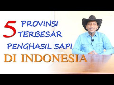 Lima Provinsi Terbesar Penghasil Sapi di Indonesia