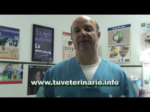 Optic antihelmintice