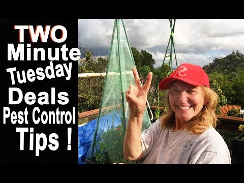 Tips on Container Gardening Vegetable Plant Pest Control & Ebay Bucks Sale Helps Keep Things Cheap