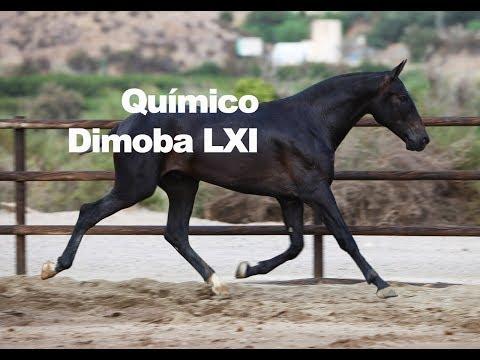 Químico DImoba LXI (Publicado 9-9-2018)
