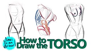 HOW TO DRAW THE MALE AND FEMALE TORSO