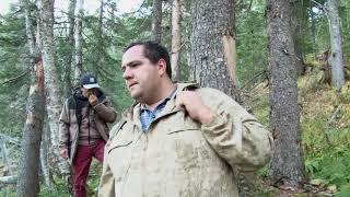 Правительственная проверка по факту вырубки леса в Солнечном районе Хабаровского края завершена