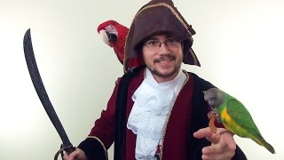 Parrot Being a Pirate on Halloween