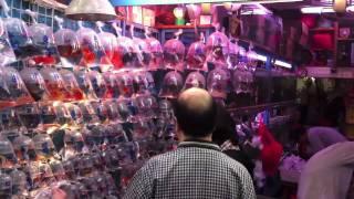 Tung Choi Street  Hong Kong (Goldfish Market)