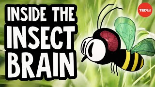 Why the insect brain is so incredible – Anna Stöckl