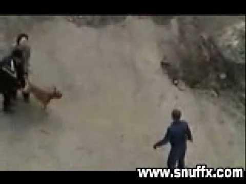 狗發狂咬人被警察開槍打死
