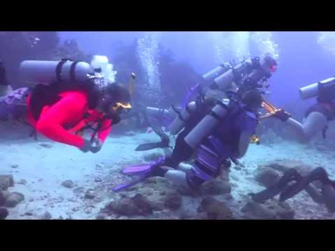 Shark Dive - May 18, 2016