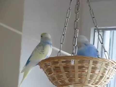 Loony und Keksi in der Vogelnestschaukel