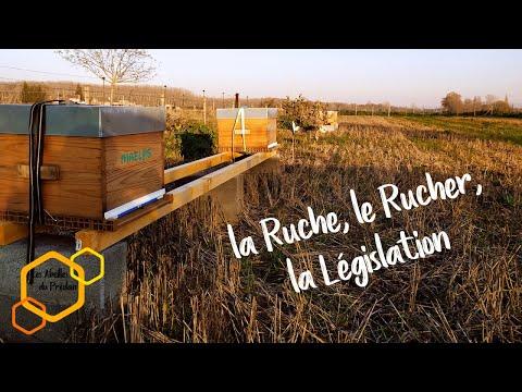 , title : 'Débuter l'Apiculture : 01 Ruche, Rucher et Législation