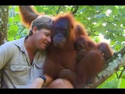 My favorite Steve Irwin moment. He would be 57 today.