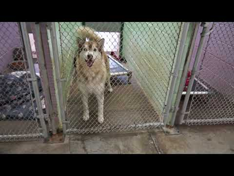Video: Unicoi County Animal Shelter, November 23