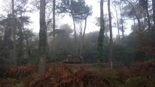 La chasse à la palombe par brouillard avec l'utilisation de grands balanciers.