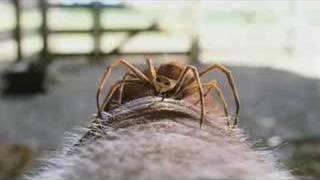 Charlotte's Web (2006) Video