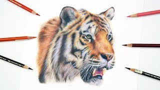 HOW TO DRAW A REALISTIC TIGER | Colored Pencil Tutorial