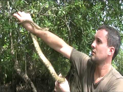 Andy Catches Wild Tree Boa