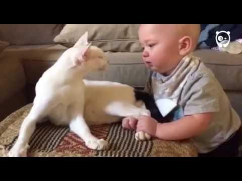 Il bimbo e il gatto di casa si incontrano e...