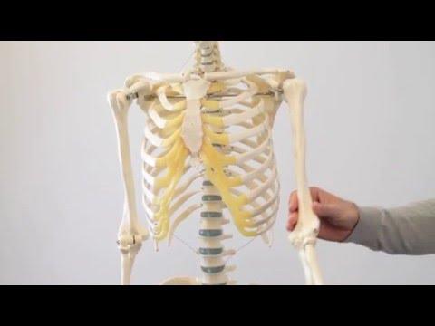Übungen für die Gelenke von Grad 3-4