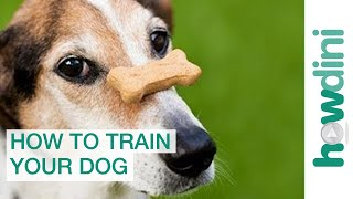 Dog Training with Positive Reinforcement: How to T...