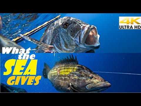Spearfishing 🇬🇷 | 🐟 WHAT THE SEA GIVES 🌊 We TAKE in RESPECT [4Κ] ✅