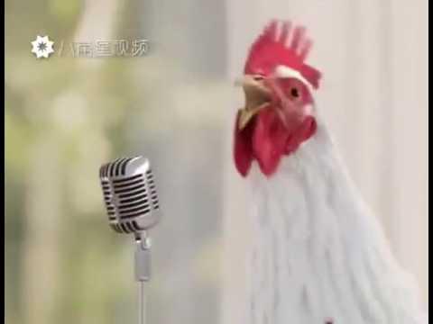 Песня куриц