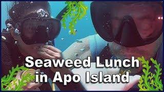 Apo Island, Lapu-Lapu