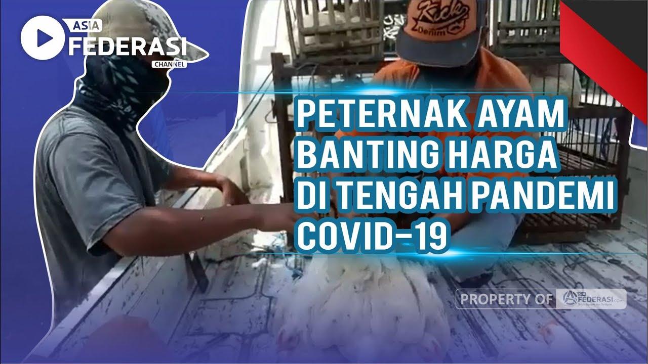 Peternak Ayam Banting Harga di Tengah Pandemi COVID-19