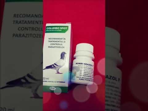 Gola da papilloma virus