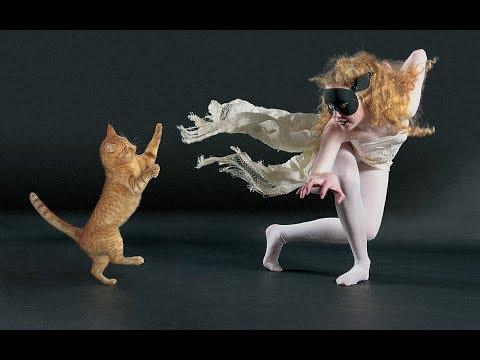 Кошачья подтанцовка🐱🐾