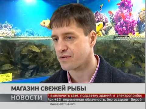 Магазин свежей рыбы. Новости. GuberniaTV
