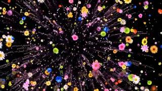 Футаж Цветочный салют HD
