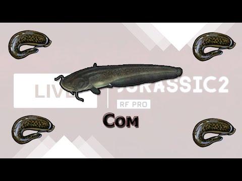 Русская Рыбалка 3.8 Ловля сомов на Урале
