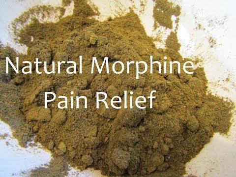 , title : 'Making Wild Lettuce Pain Relief Medicine Powder